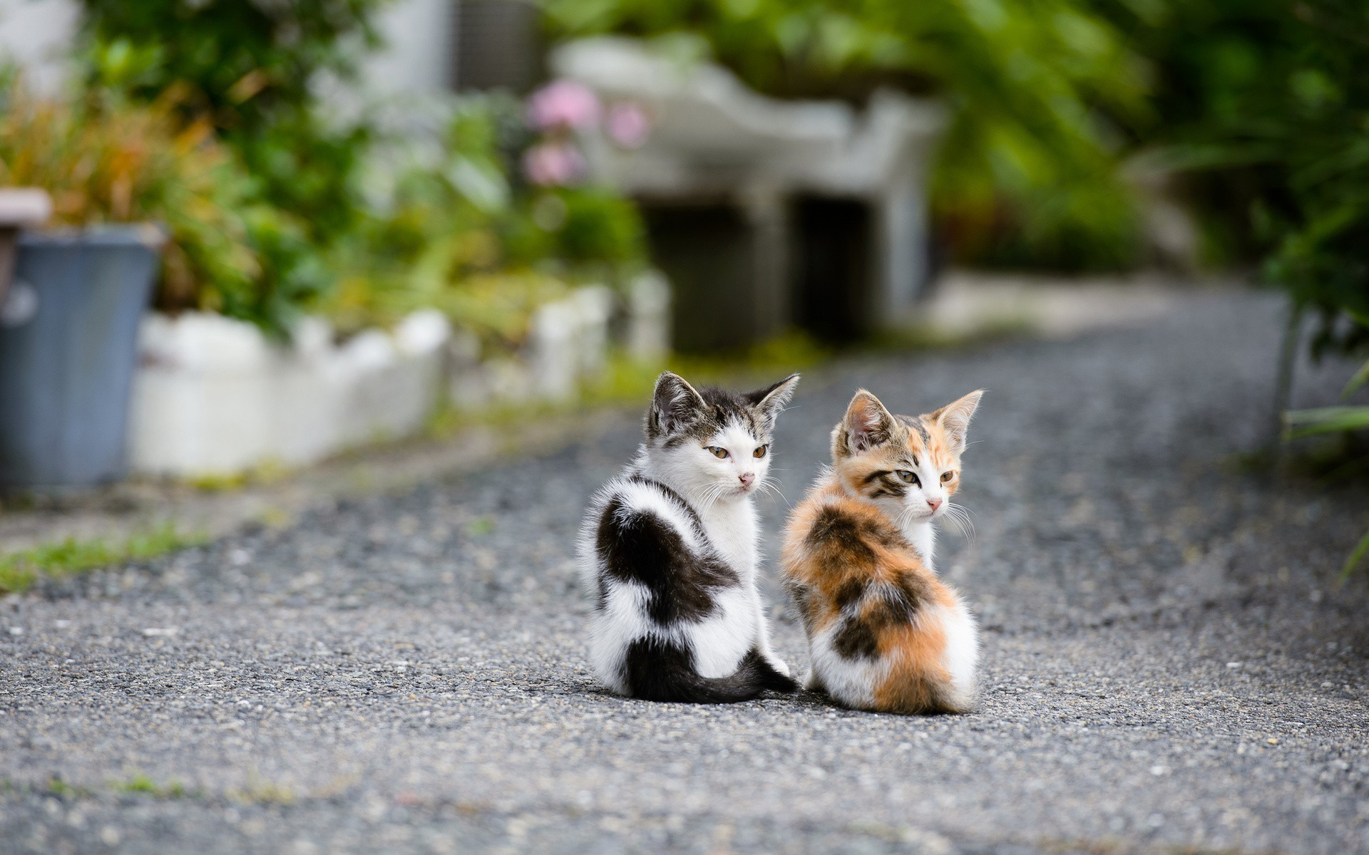 cat-couple-hd-wallpapers